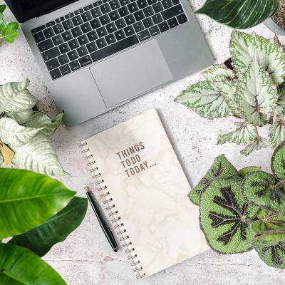Choosing the Right Plant for Your Space