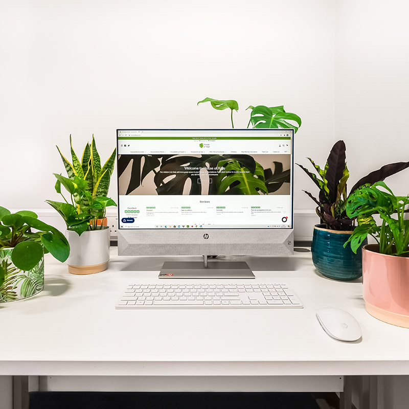 House of Kojo Plants